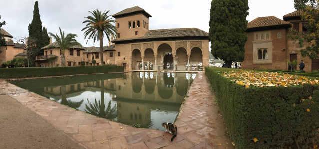 Primer plano seto de boj cubierto de hojas amarillas, al fondo se ve un palacio musulmán, con una alberca, palacio de cinco arcos y un pequeño pabellón en el piso alto, con una palmera y un gato en la esquina derecha