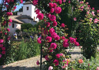 Arco metálico repleto de rosas y detrás se ve un edificio blanco que es el Palacio del Generalife de Granada