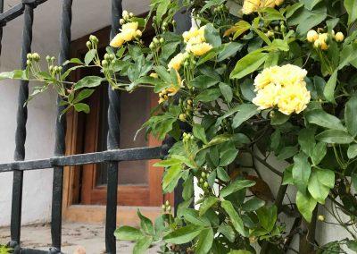 Flores amarillas pequeñas en una ventana con reja